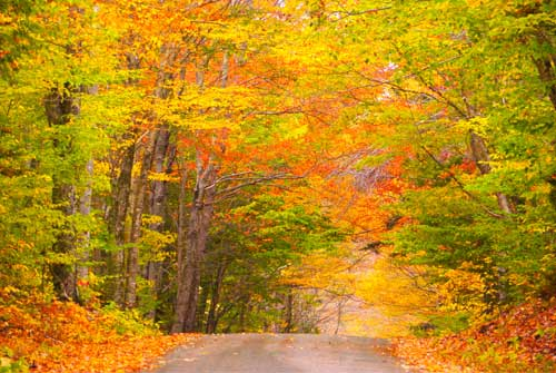 Insignia, Fall Splendors ex New York to Montreal