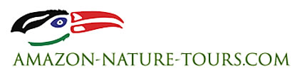 Amazon Nature Tours